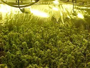 De quelle manière Conserver Des Graines Du Cannabis